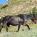 Dark And Wild Horse by Sabrina L Ryan