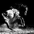 Dark Dance by Carol Walker