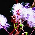 Dark Dandelions by Brian Stevens
