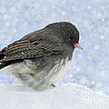 Dark Eyed Junco - Digital Snowflakes by Debbie Portwood