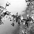 Dark Flower by Image-in Photoart