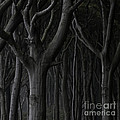 Dark Forest by Heiko Koehrer-Wagner