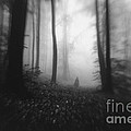 Dark Forest With Man Shadow Trough Trees by Photo Cosma