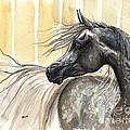Dark Grey Arabian Horse 2014 02 17 by Angel Ciesniarska