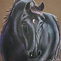 Dark Horse by Susan Herber