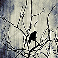 Crow In Dark Lights by Gothicrow Images