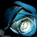 Dark Rose by Katherine Forrester