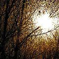 Dark Sun by Matthew Barton