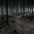 Dark Trail by Joe Wigdahl
