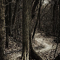 Dark Winding Path by Scott Norris