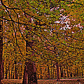 Darker Textured Autumn Trees by Minding My  Visions by Adri and Ray