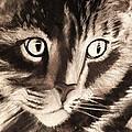 Darling Cat by Renee Michelle Wenker