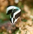 Dartfish Checking Me Out by Jill Jermann