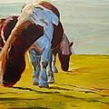 Dartmoor Ponies by Mike Jory