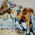 Dartmoor Pony by Mike Jory