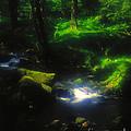 Dartmoor Stream by Alex Cassels