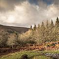 Dartmoor View by Jan Bickerton