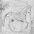Da Vinci Horse Piaffe Grayscale by Catherine Twomey