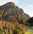 Dawn At Kirstenbosch by Neil Overy