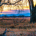 Setting Sun At Rocky Mountain Arsenal by Tom Potter