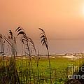Dawn At The Lake by Edgar Laureano