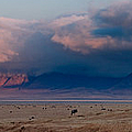 Dawn In Ngorongoro Crater by Adam Romanowicz