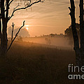 Cannock Chase Dawn Mist by Ron Evans