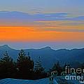 Dawn Over Cross Forest by Violeta Ianeva