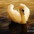 Dawn Swan by Wobblymol Davis
