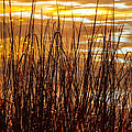Dawn's Early Light by Karen Wiles