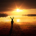 Dawn's Golden Light by Jennifer Woodward