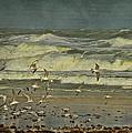 Day For The Birds by Deborah Benoit