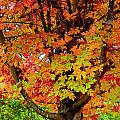 Day Glo Autumn by Rodney Lee Williams