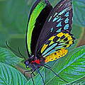 Day-glo Butterfly by Larry Nieland