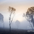 Cannock Chase Day Is Dawning by Ron Evans