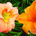 Day Lilies As Happy Friends by Paddy Shaffer