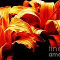 Day Lilies by Brian Druggan