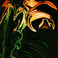 Day Lily At Night by Mim White