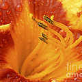 Day Lily In The Rain - 688 by Paul W Faust -  Impressions of Light