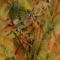 Day Of The Dragonfly by Michele Thorp