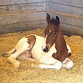 Day Old Colt by Gordon Elwell