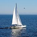 Day On The Bay by AJ  Schibig