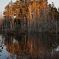 Daybreak At The Pond by Susan Capuano