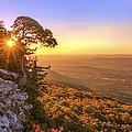 Daybreak On Mt. Magazine - Arkansas - Cedar Tree - Autumn by Jason Politte