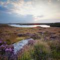 Daybreak Over Connemara Bog by Peter McCabe
