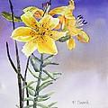 Daylilies by Patricia Novack