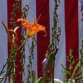 Daylily And Old Glory by Bill Tomsa