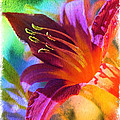 Daylily Delight by Carol Groenen