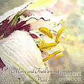 Daylily Photoart With Verse by Debbie Portwood