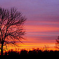 Day's End Elm by Bill Pevlor